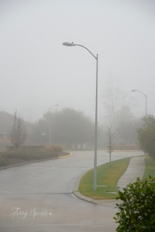heavy fog 017