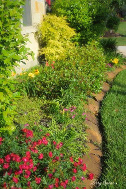 front planting bed, yellow sunshine ligustrum 1000 015