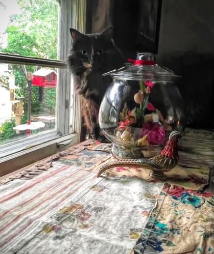 Donna's cat1