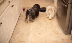 dogs chasing vacuum 1000 081