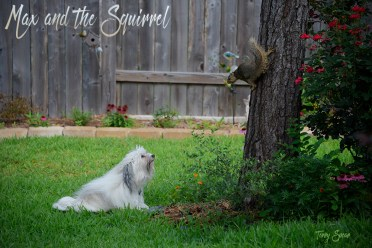 max and the squirrel 1000 074