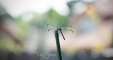 dragonfly bokeh pastel background 1000 063