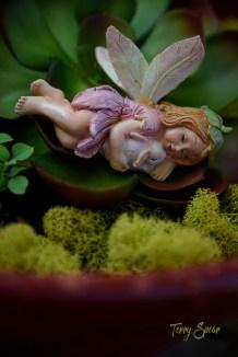 fairy in the garden Donna 1000 318