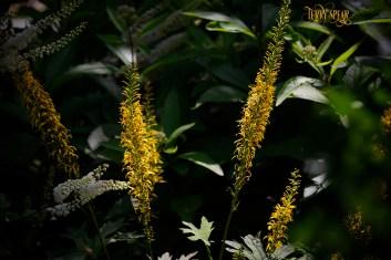 golden flowers 1000 Minnesota 289