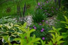 hostas garden (800x534)