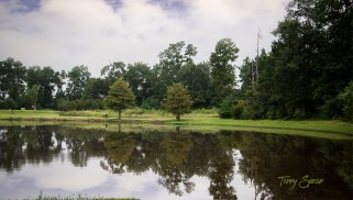 pond reflection stormy 1000 010