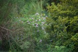walk purple wildflowers 1000 064