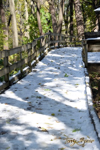 snow covered walkway in the forest 1000 1268