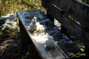 snowmen on a bench in the forest reserve 1000 1398