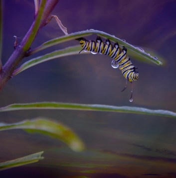 caterpillars in stasis water drops magical sky 1000 001