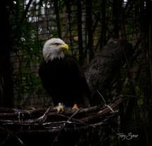 eagle 1000