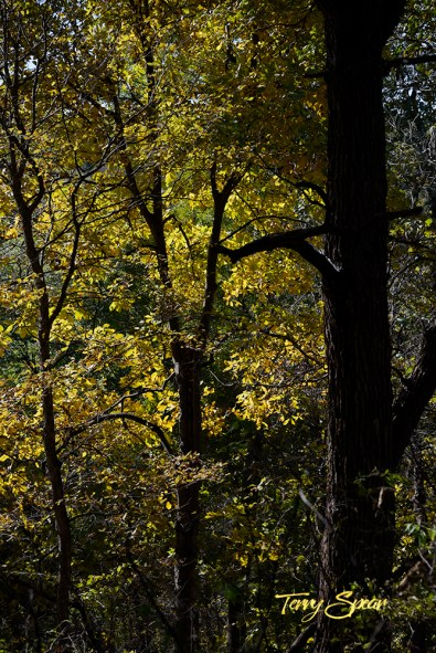 fall leaves in a forest 1000 1452