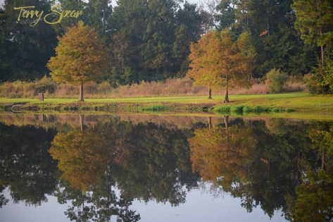 fall reflection pond 1000 028
