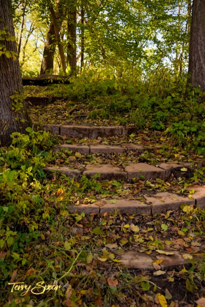 stairs in the woods 1000 1484
