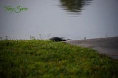turtle 1000 011