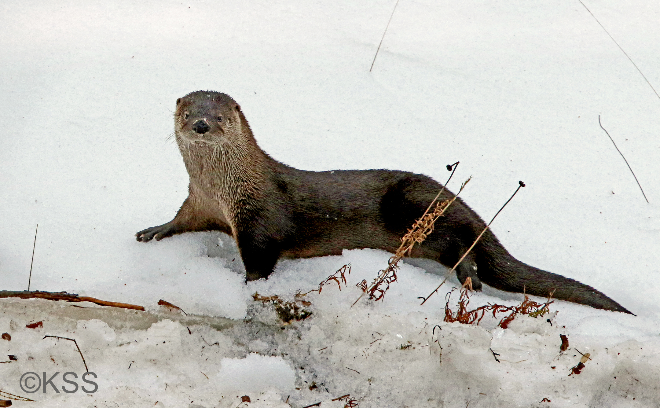 The Week of the River Otters - Nature Photography