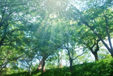 森の中の日差し