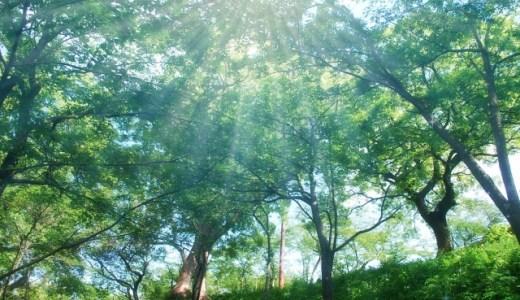 生き甲斐を見つけ、ゆっくりと休みながらでも歩いて行きましょう