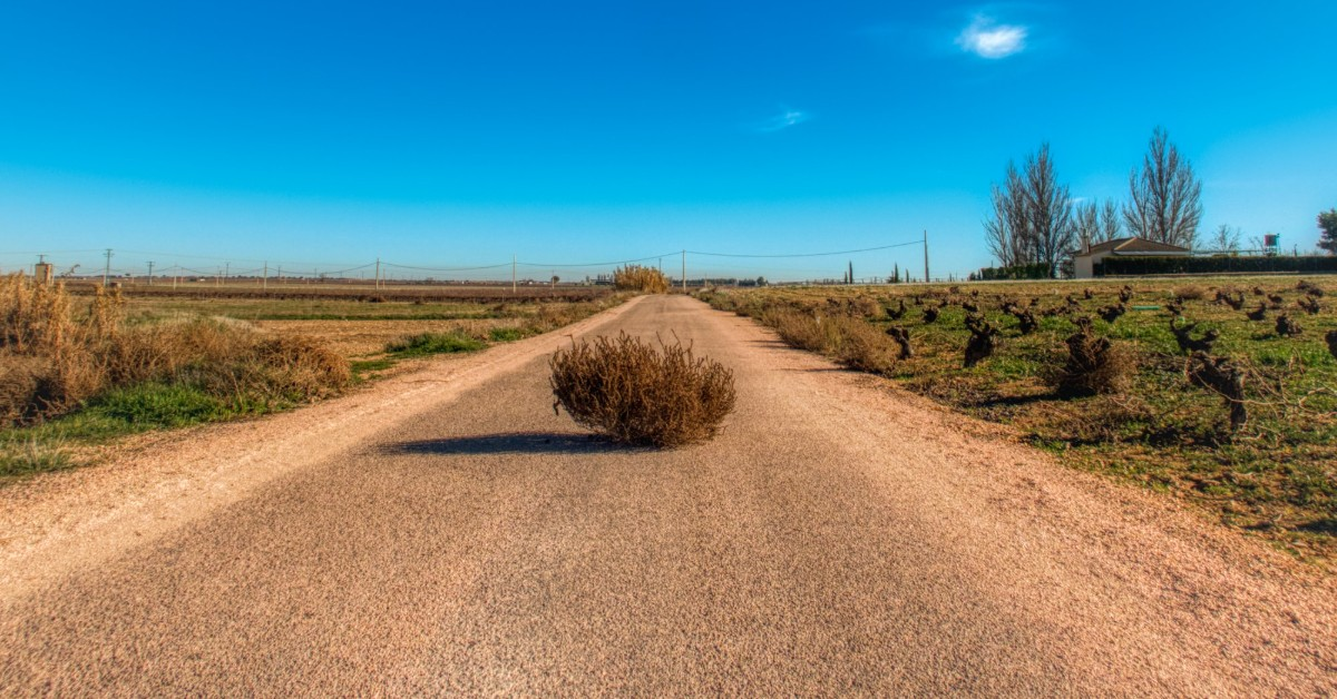 Tumbleweed lying in the middle of a dry and dusty road