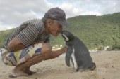 Pinguini noton 8 mijë km çdo vit, për të takuar njeriun që e shpëtoi