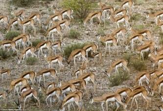 E gjeni dot sa kafshë ka në këtë foto?