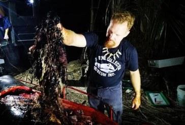 Ç'tmerr! 40 kg plastikë në barkun e një balene të ngordhur