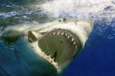 """Shtatzënë, me peshkaqenin """"dhëmbë për dhëmbë"""": si gruaja shpëton burrin ikja për…vakt!"""