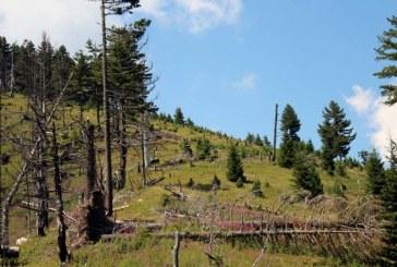 SHTETI/ Ndërhyrja e Ahmet Zogut në Kodin Penal për të mbrojtur pyjet: i gjithë populli rojtar!