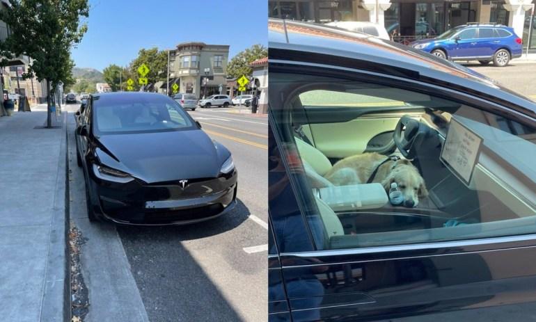 Tesla Model X Plaid замечена для тестирования режима собаки в дикой природе