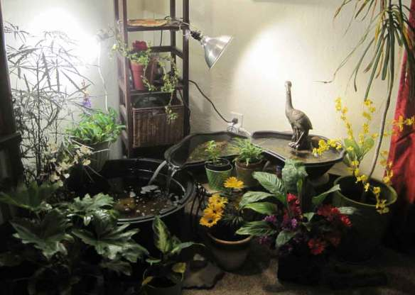 Indoor paradise to support mood during retreat.  July 2015