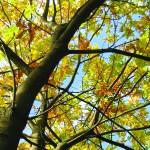 EcoTimber Tesoro Woods Document Downloads