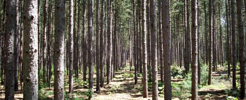 Tesoro Woods | Earth Day 2018 – Growing Green Flooring