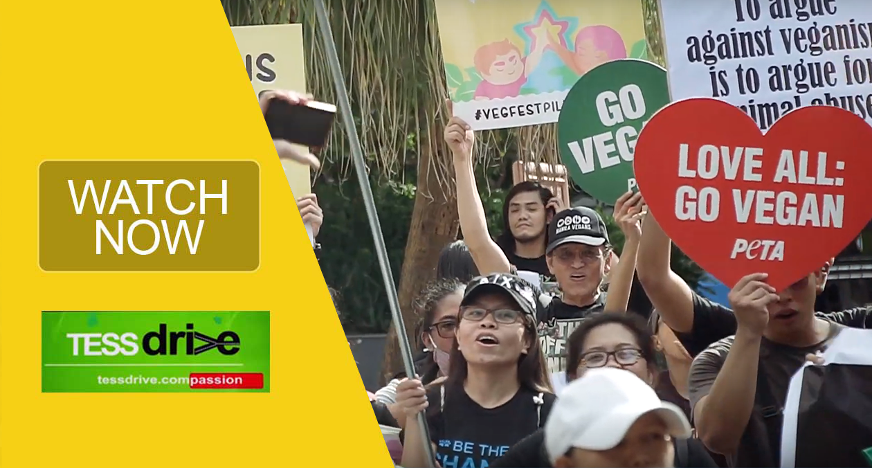 Manila Animal Rights MArch 2019 Philippines