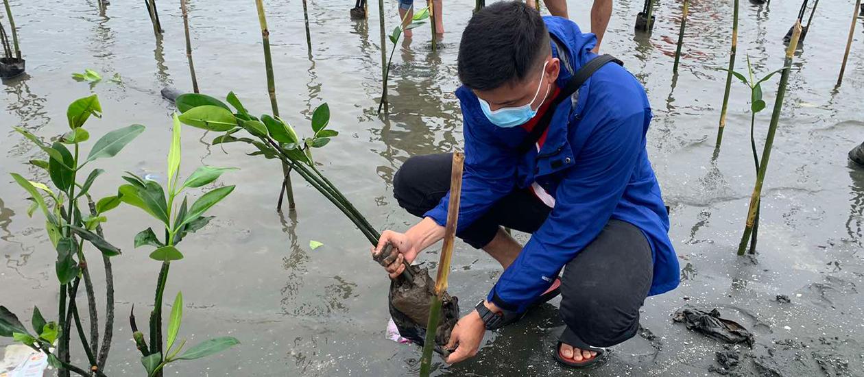 Man planting mangrove