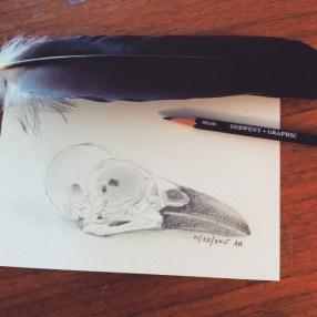 Crow Skull Sketch