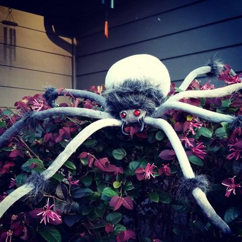 Giant Fuzzy Spider
