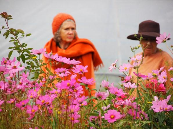 Gardening is a part of yogic life at the Rocklyn Ashram.