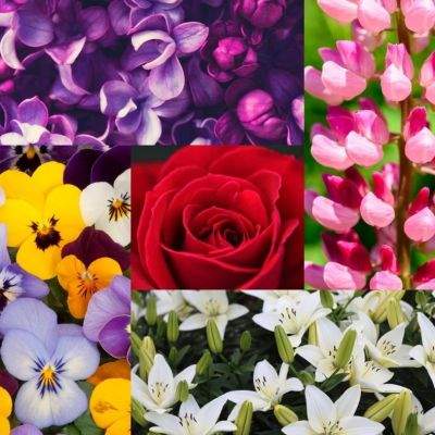 The Magical and Metaphysical Properties of Flowers