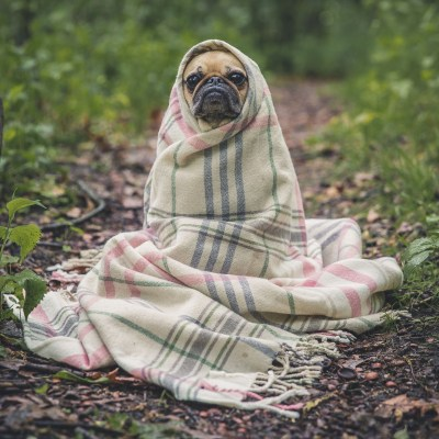 5 Ways to Make the Most of the Year of the Dog
