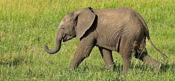 Fotoreise_Fotosafari_Fotoworkshop_Benny-Rebel_Afrika_Tansania_004_Elefant