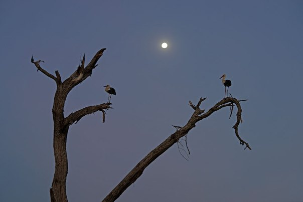 Fotoreise_Fotosafari_Fotoworkshop_Benny-Rebel_Afrika_Tansania_007_Storch