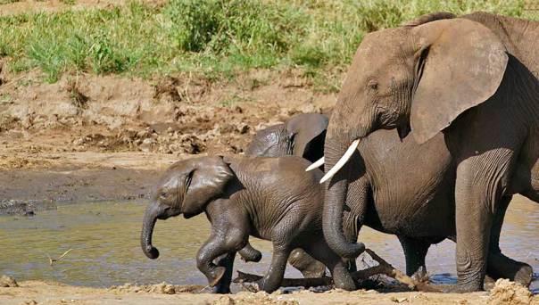 Fotoreise_Fotosafari_Fotoworkshop_Benny-Rebel_Afrika_Tansania_010_Elefant