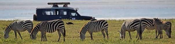 Fotoreise_Fotosafari_Fotoworkshop_Benny-Rebel_Afrika_Tansania_015_Zebra