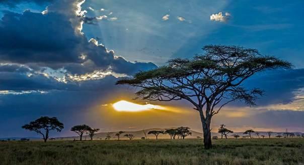 Fotoreise_Fotosafari_Fotoworkshop_Benny-Rebel_Afrika_Tansania_082_Serengeti