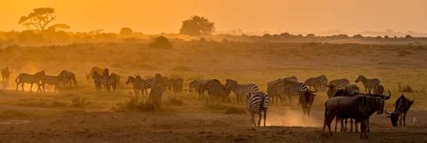 Fotoreise_Foto-Safari_Kenia_Lake_Amboseli_DSC7166