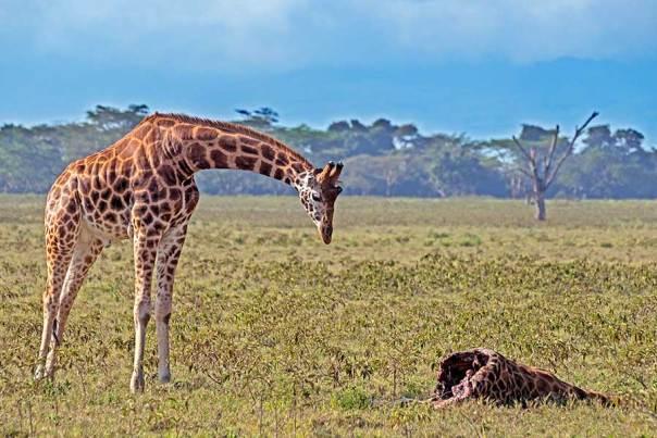Fotoreise_Foto-Safari_Kenia_Lake_Nakuru_DSC0709