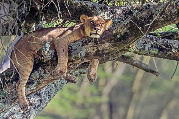 Fotoreise_Foto-Safari_Kenia_Lake_Nakuru_DSC5641