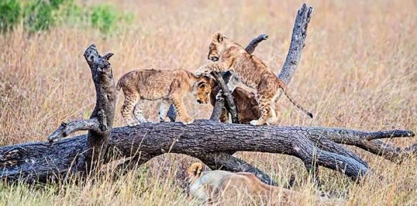 Fotoreise_Foto-Safari_Kenia_Masai_Mara_DSC2514