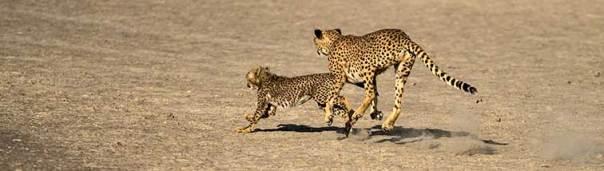 Fotoreise_Fotosafari_Tansania_Afrika_041