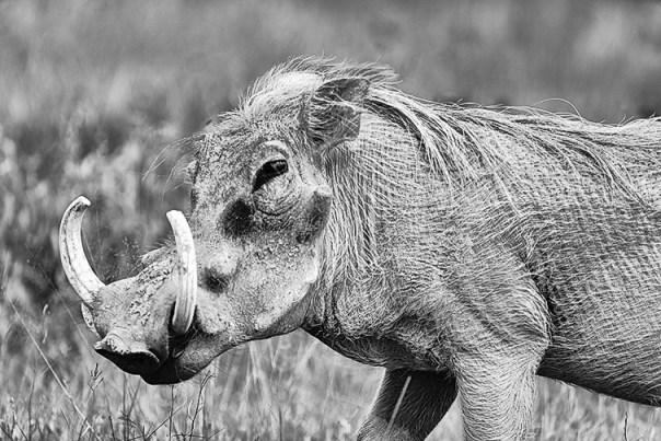 Fotoreise_Fotosafari_Afrika_Tansania_Benny_Rebel_DSC0011